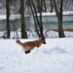 vyhľadávanie v snehu 004