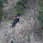 vyhľadávanie osôb v lese 220